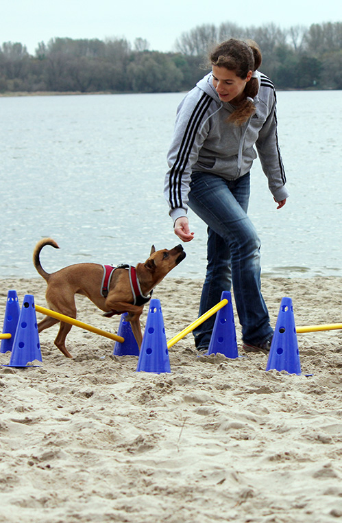 Hunde-Physiotherapie am Elbstrand